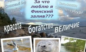 """Творческий фестиваль """"Я люблю Финский залив"""""""